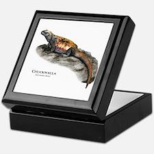 Chuckwalla Keepsake Box