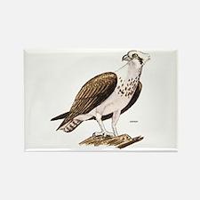 Osprey Bird Rectangle Magnet