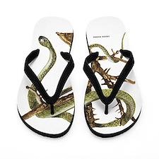 Green Mamba Snake Flip Flops
