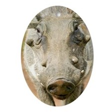"""""""Closeup of face of warthog in Umf Ornament (Oval)"""