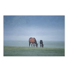 Horse and offspring grazi Postcards (Package of 8)