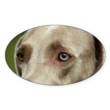 Weimaraner -The Eyes Have It Rectangle Decal