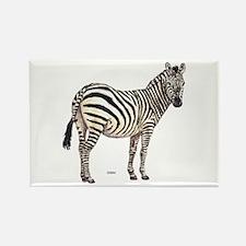 Zebra Animal Rectangle Magnet