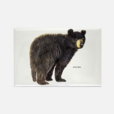 Black Bear Rectangle Magnet