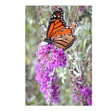 Butterfly: Monarch Postcards