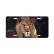 Closed Up Image of a Lion H Aluminum License Plate