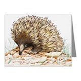 Echidna Note Cards (20 Pack)