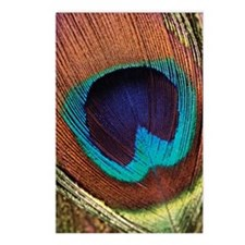 Close-up of a peacock fea Postcards (Package of 8)