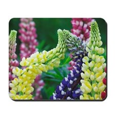 Russell lupins Mousepad
