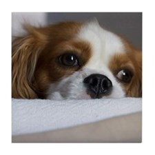 Cute Cavalier Tile Coaster