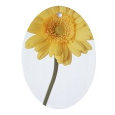 Close-up of one yellow zinnia Ornament (Oval)