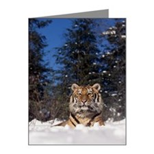 Siberian tiger Note Cards (Pk of 10)