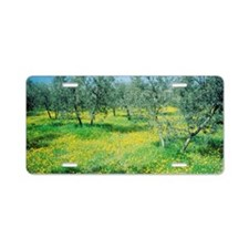 Italy, Umbria, Olive orchar Aluminum License Plate