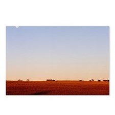Field with moon and anima Postcards (Package of 8)