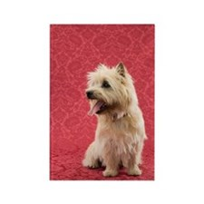 Cairin terrier Rectangle Magnet