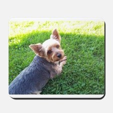 Attention dog loverAdorable little Yorky dog in HD