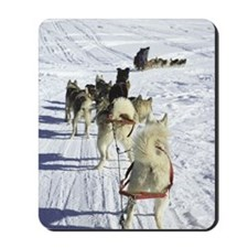 Sled dogs in snow Mousepad