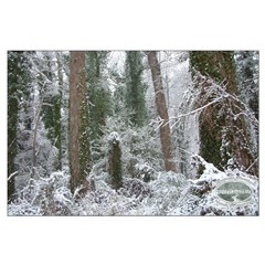 Chesapeake Arboretum snow on winter trees