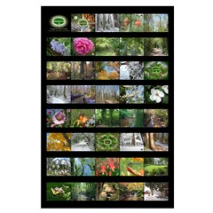 23X35 Chesapeake Arboretum calendar images poster