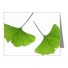 Ginko (Ginko Biloba) Leaves Note Cards (Pk of 20)