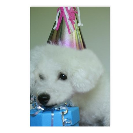 Close-up of a Bichon Fris Postcards (Package of 8)