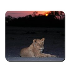 Young Lion at Sunrise Mousepad
