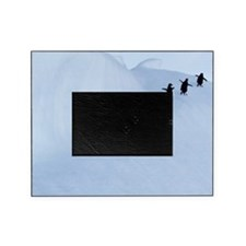 Adelie penguins (Pygoscelis adeliae) Picture Frame