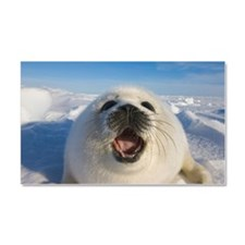 Baby Artic Seal in Canada Car Magnet 20 x 12