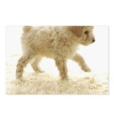 Poodle puppy Postcards (Package of 8)