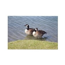 Geese Rectangle Magnet