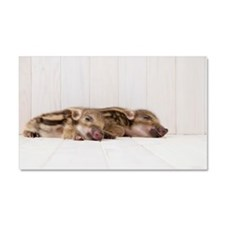 Two baby boars sleeping Car Magnet 20 x 12