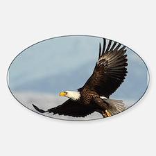 Eagle Flight Decal