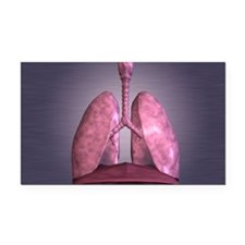 Human Lungs Rectangle Car Magnet