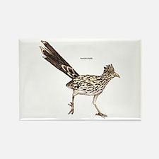 Roadrunner Desert Bird Rectangle Magnet (10 pack)