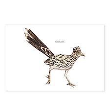 Roadrunner Desert Bird Postcards (Package of 8)