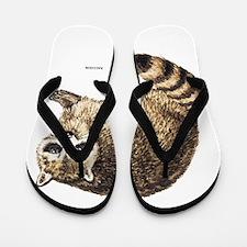 Raccoon Coon Animal Flip Flops