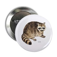 """Raccoon Coon Animal 2.25"""" Button (10 pack)"""