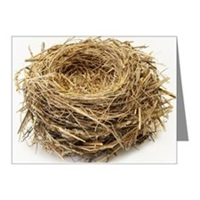 Empty bird's nest Note Cards (Pk of 20)