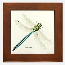 Green Darner Insect Framed Tile