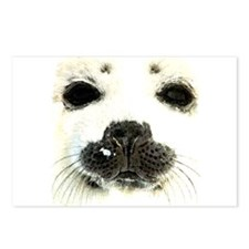 harp seal 1 Postcards (Package of 8)