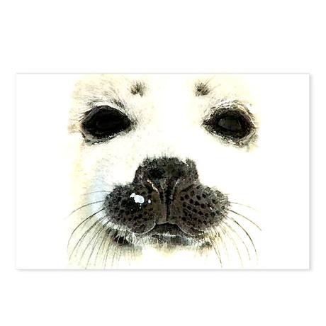 harp seal 1 Postcards (Package of 8)