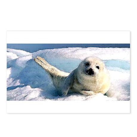harp seal 2 Postcards (Package of 8)