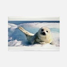 harp seal 2 Rectangle Magnet