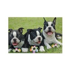 Easter boston terriers Rectangle Magnet (100 pack)