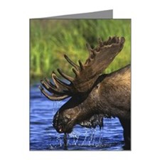 Side view of moose in water Note Cards (Pk of 20)