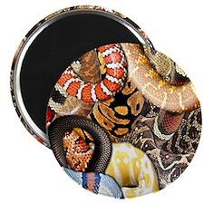 Snake Collage Magnet