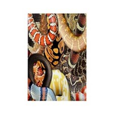 Snake Collage Rectangle Magnet
