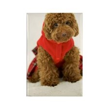 Portrait of Toy Poodle wearing cl Rectangle Magnet