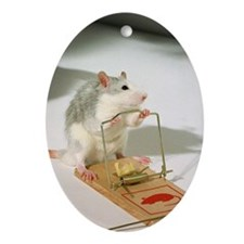 A mouse by a mouse-trap. Ornament (Oval)