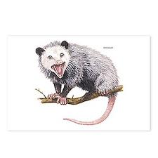Opossum Possum Animal Postcards (Package of 8)